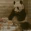 DosKoi Panda