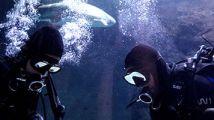 Des requins gardent la première Xbox One a être lancée dans le monde