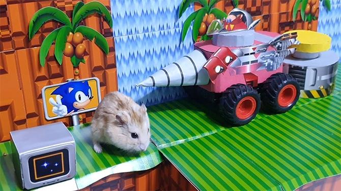 Ils recréent un niveau de Sonic 2... pour leur hamster, la vidéo