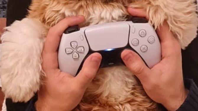L'image du jour : Accro à la DualSense, il s'incruste sans complexe - gameblog.fr