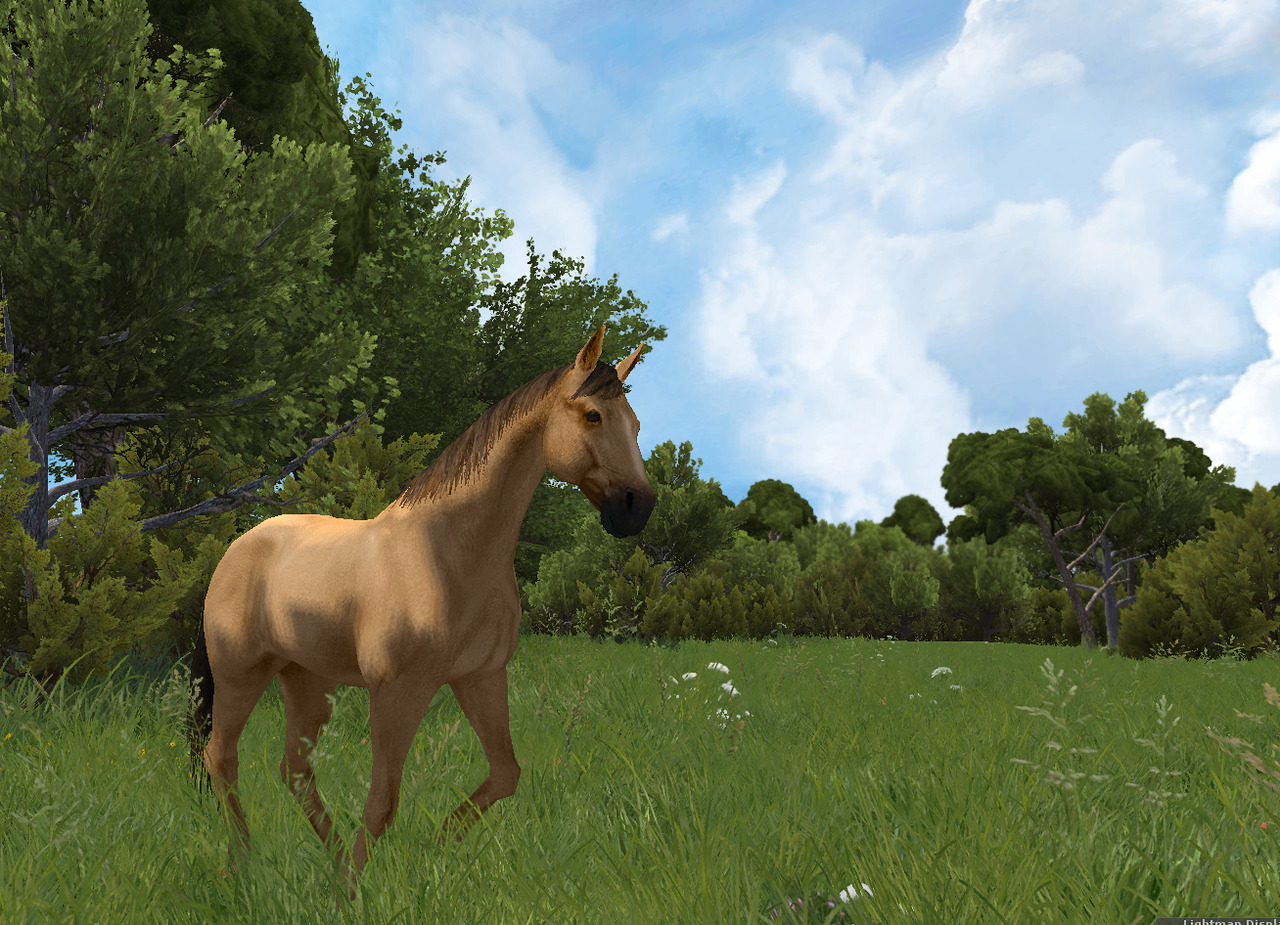 Horse Star PC Edit004