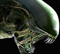 Jaquette de Alien : Blackout Android