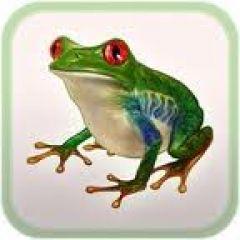 Jaquette de Frog Minutes iPad