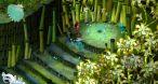 Efrim peut manipuler ce petit Platypus bleu, qui transporte du gel Wakfu ou s'insinue dans des lieux inatteignables par le duo.
