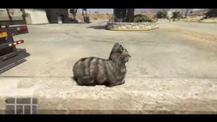 Un chat a peur dans GTA V