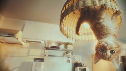 Gravity Cat : un trailer live-action japonais renversant pour Gravity Rush 2