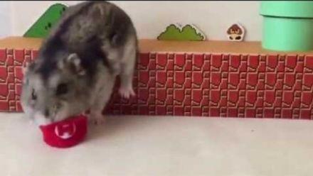 Vid�o : Hamster Super Mario Bros