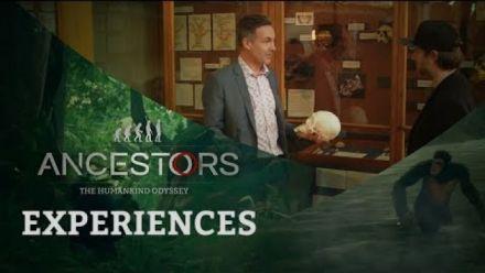 vidéo : Ancestors : The Humankind Odyssey - The Antropologist