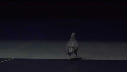Vidéo : League of Legends : Vancouver Pigeon