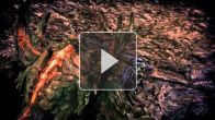 vidéo : Tera - le lancier