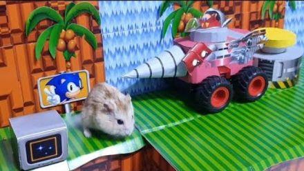 Vidéo : Sonic 2 reproduit pour un hamster